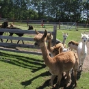 herdgate